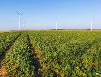 Primavera o paesaggio autunnale con i mulini a vento sui campi Immagini Stock