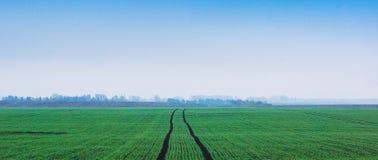Primavera o paisaje del verano, un campo ancho con un camino en el midd imagen de archivo libre de regalías