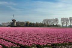 Primavera in Olanda Fotografia Stock