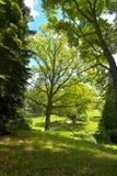 In primavera parco fotografie stock libere da diritti