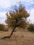 A primavera passada ilustrações da árvore para anúncios e websites1 Fotografia de Stock Royalty Free