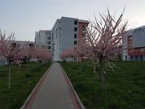 Primavera-prima del tramonto immagini stock libere da diritti