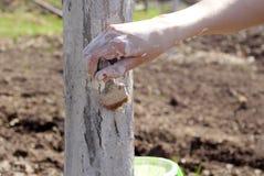 Primavera proceso de árboles Fotografía de archivo libre de regalías