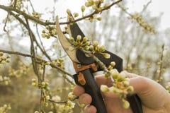 Primavera que cultiva un huerto, poda Imágenes de archivo libres de regalías