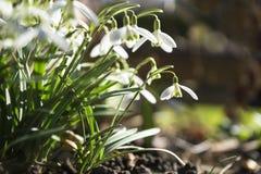 Primavera que despierta Fotografía de archivo libre de regalías