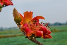 Primavera roja de la flor Fotografía de archivo libre de regalías