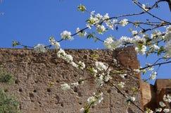 Primavera a Roma Fotografia Stock