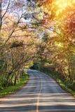 Primavera romantica di autunno della strada Immagine Stock