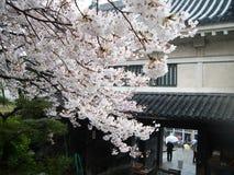 Primavera Sakura en Kyoto, Japón foto de archivo