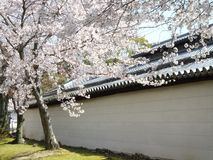 Primavera Sakura a Kyoto, Giappone fotografia stock