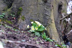 Primavera salvaje Fotografía de archivo libre de regalías