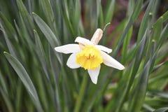 Primavera selvaggia della pianta del fiore Immagini Stock Libere da Diritti