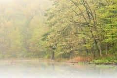 Primavera Shoreline in nebbia Fotografia Stock