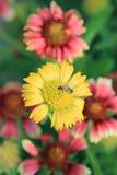 Primavera soleada con las flores Fotografía de archivo libre de regalías