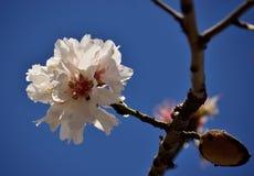 Primavera in Spagna Immagine Stock