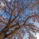Primavera in Spagna Fotografie Stock
