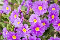 Primavera Stock Photography
