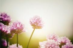 Primavera Sunny Mood Fotografia Stock