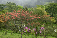 Primavera Taiwan Fotografia Stock
