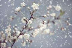 Primavera temprana. Fotos de archivo libres de regalías