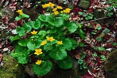 Primavera temprana 28 Imagen de archivo libre de regalías