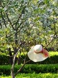 Primavera temprana Fotografía de archivo