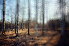 primavera temprana del fondo en bosque Imágenes de archivo libres de regalías