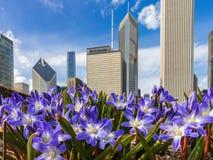 Primavera temprana en Chicago céntrica foto de archivo libre de regalías