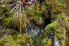 Primavera temprana en cierre del bosque de Alemania para arriba Imagen de archivo libre de regalías