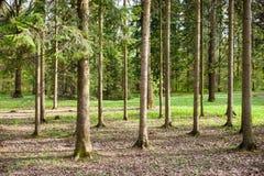 Primavera temprana en el bosque mezclado imagenes de archivo