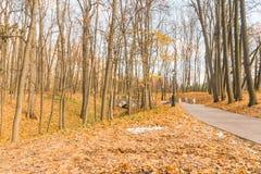 Primavera temprana en el forest1 Fotos de archivo