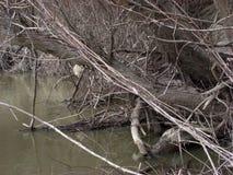 Primavera temprana en el río 3 Foto de archivo