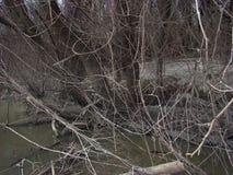 Primavera temprana en el río 4 Fotos de archivo libres de regalías