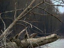 Primavera temprana en el río 5 Foto de archivo