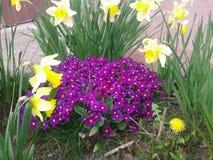 Primavera temprana en jardín Imagenes de archivo