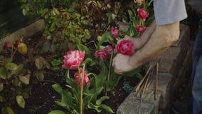 Primavera Trabajo en el jardín Flores de riego almacen de video