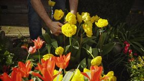 Primavera Trabajo en el jardín Flores de riego metrajes