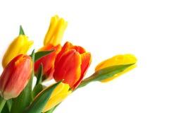 Primavera Tulip Flowers sopra bianco Mazzo dei tulipani DES floreale del confine immagini stock