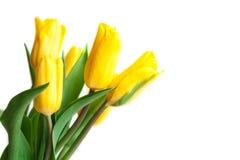 Primavera Tulip Flowers sopra bianco Mazzo dei tulipani DES floreale del confine fotografia stock libera da diritti