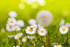 Primavera verde Imagen de archivo libre de regalías