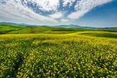 Primavera verde di Rolling Hills in Toscana Italia immagine stock libera da diritti
