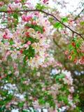 Primavera in Washington DC Immagini Stock Libere da Diritti