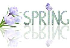 Primavera y azafranes Foto de archivo libre de regalías