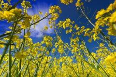 Primavera y cielo Fotos de archivo libres de regalías