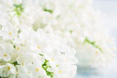 Primavera y concepto del verano con la lila fresca ligera blanca del aroma en fondo azul Fondo del concepto de la fragancia Flor  imagenes de archivo