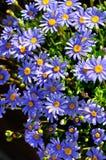 Primavera y flores Fotografía de archivo libre de regalías