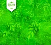 Primavera y fondo verdes del verano Foto de archivo libre de regalías
