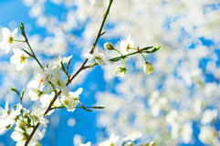 Primavera y naturaleza Foto de archivo libre de regalías