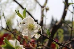 Primavera in Yanzhou immagini stock