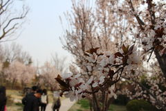 Primavera in Yanzhou fotografia stock